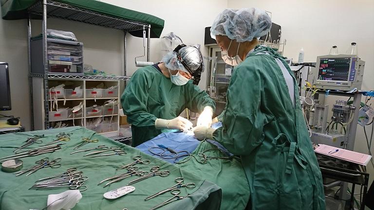 去勢・避妊手術の重要性