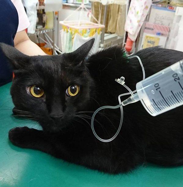 猫のよくある病気