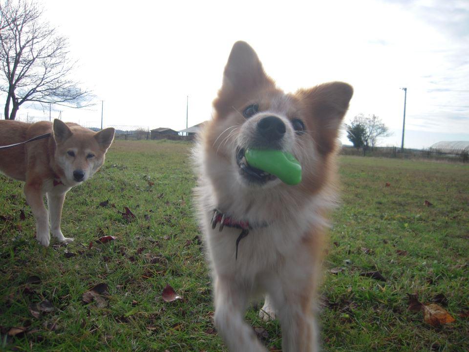 犬の注意点