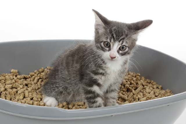 猫の泌尿器系の病気